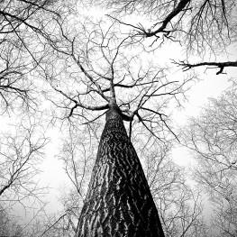 תנוחת העץ – Vrikshasana