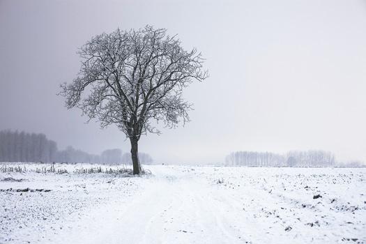 TreeWinter